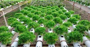 Berkebun Dengan Pipa PVC
